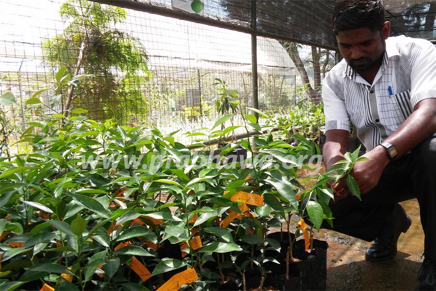 Prabhawa tree planting program- selecting good species(Green Island)